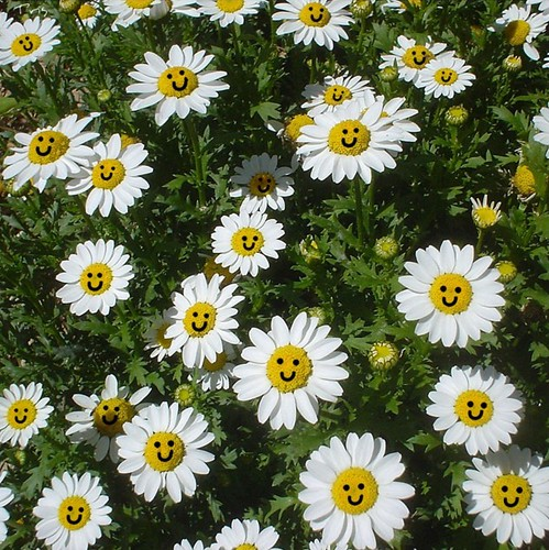 Daisies by _tris_
