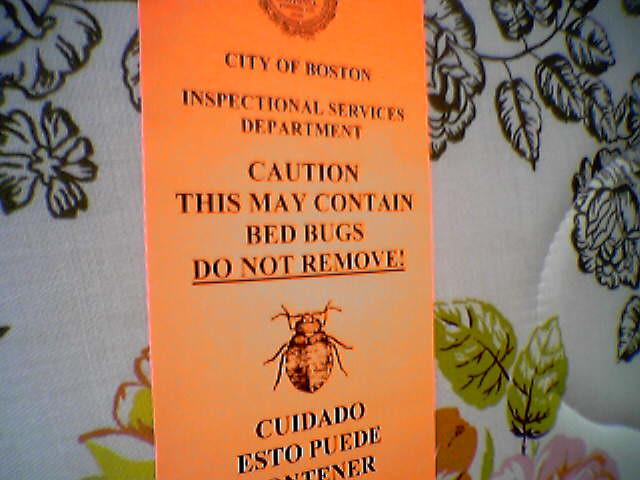 Grand Hotel Toronto Bed Bugs