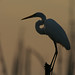 egret by amaw