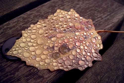 Droplets (1)