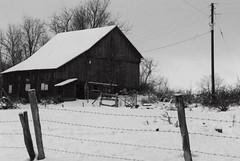 winter, snow, shack, sugar house, blizzard,