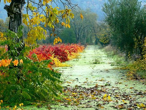 california road leica autumn trees 2004 leaves lumix vineyard vines view wine calistoga winery napavalley dmcfz10
