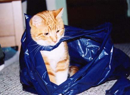 Charlie in bag