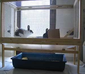 Plans to Build a Rabbit Hutch | eHow.com