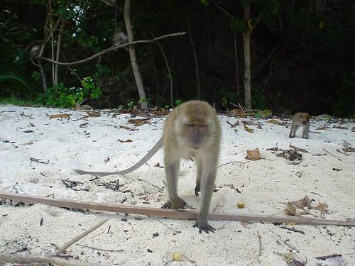 Poda Island monkey 1