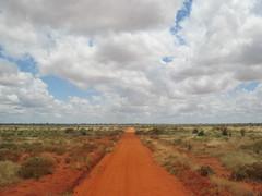 Africa safari landscape