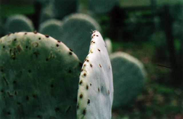 Cactus Jack Used Cars Tucson