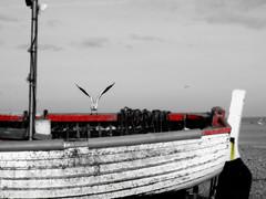 Landing Gull , Aldeburgh Beach