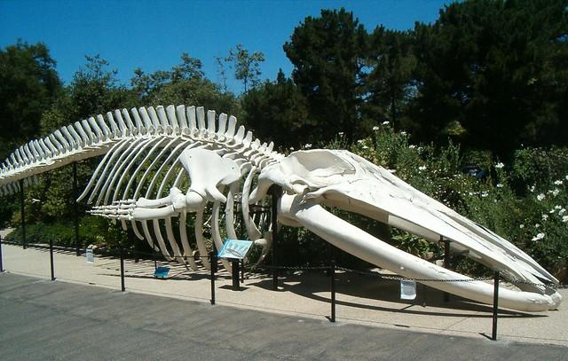 The Santa Barbara Museum Of Natural History