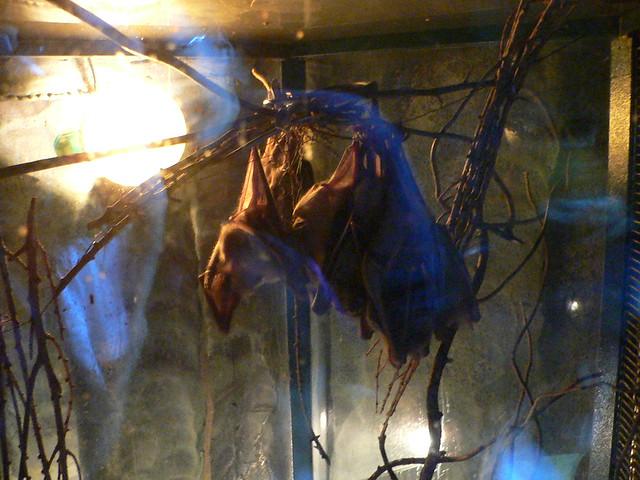 fruit bats definition of a fruit