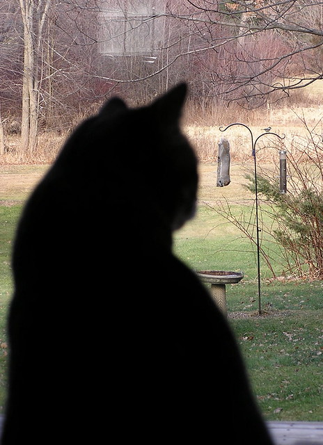 cat watching squirrel on birdfeeder