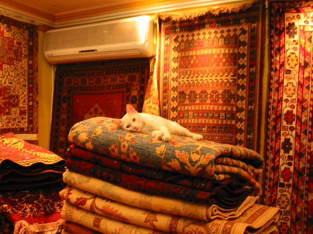 Van cat in carpet shop