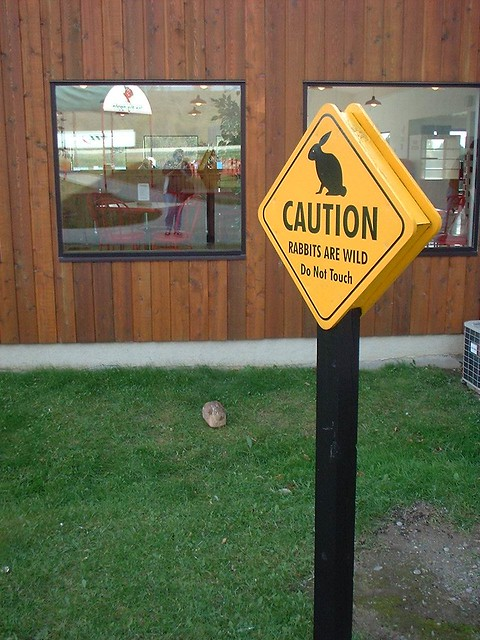 Caution...bunnies!!, Fujifilm FinePix1300