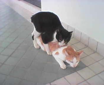 Cats Havin Sex 78