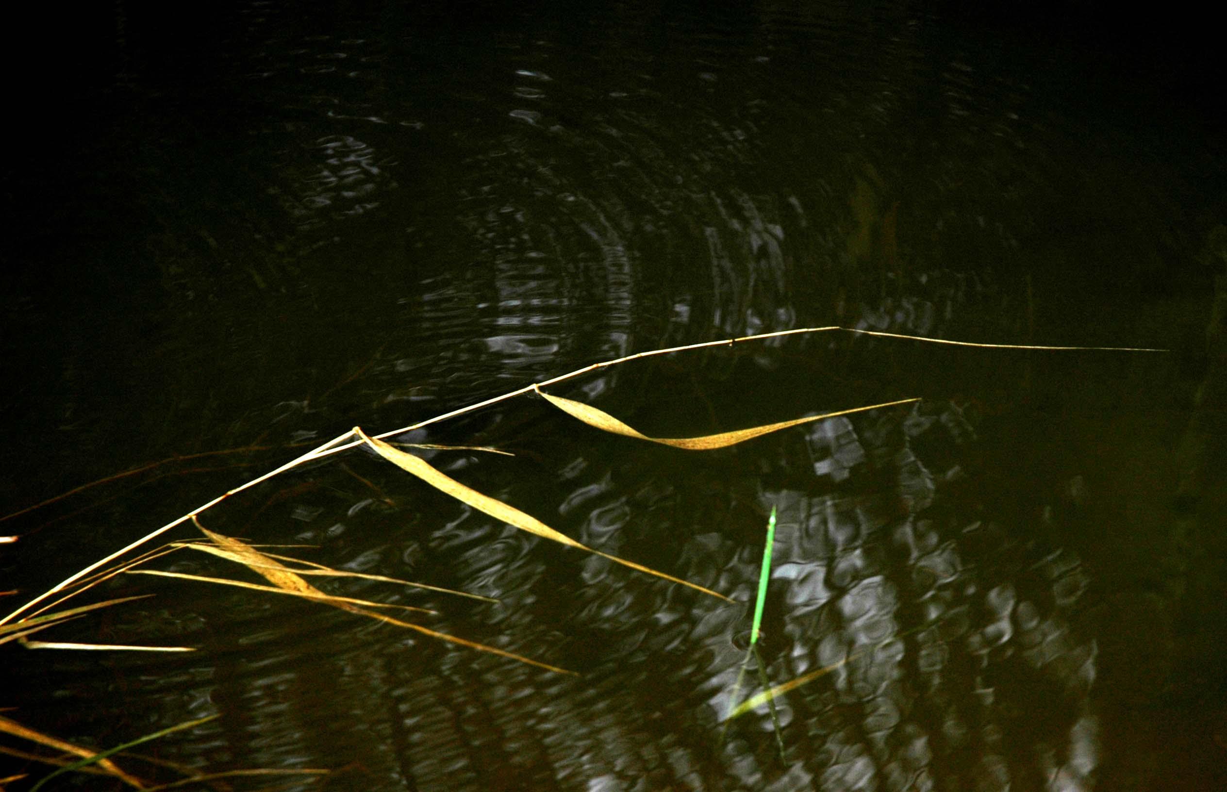 grassandwater