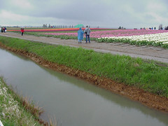 polder, levee, field, channel, canal, ditch,