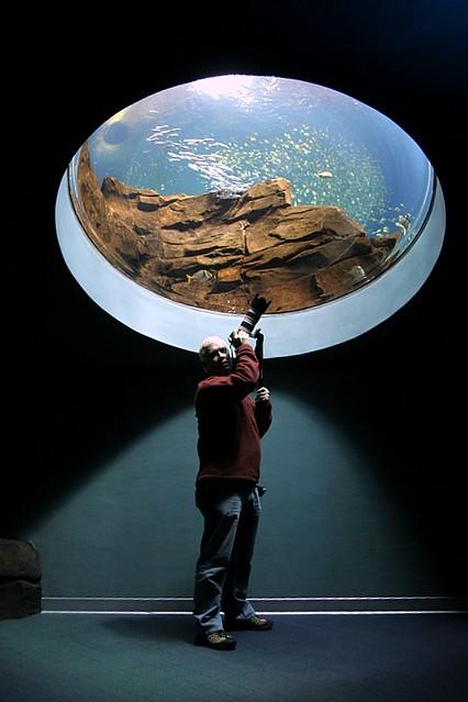 Georgia Aquarium, Quick Visit 12-06-05