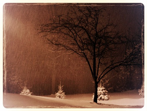 york winter bw white snow black cold tree topf25 beautiful sepia wonderful landscape fantastic gorgeous awesome great dramatic pa ethereal serene lovely magical 1111v11f 74points