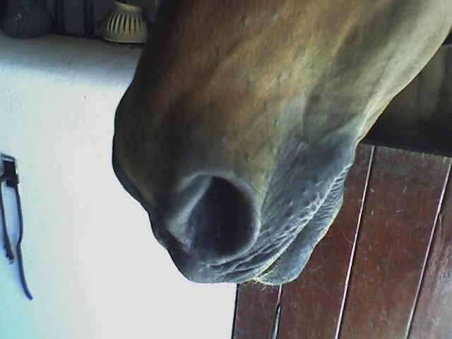 Alchemy 39 S Nose Alchemy 39 S Pretty Little Nose He Was Having Flickr Photo Sharing