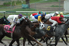 harness racing(0.0), animal sports(1.0), horse racing(1.0), racing(1.0), equestrian sport(1.0), sports(1.0), race(1.0), horse trainer(1.0), horse harness(1.0), race track(1.0), jockey(1.0),