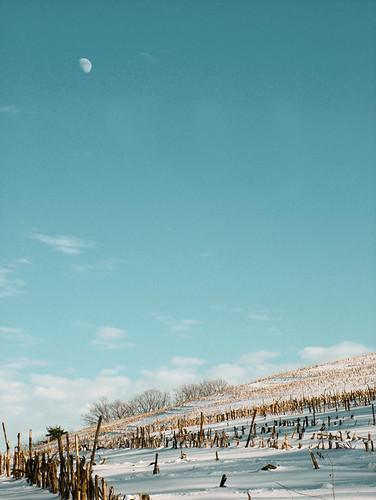 Snow covered corn field and moon