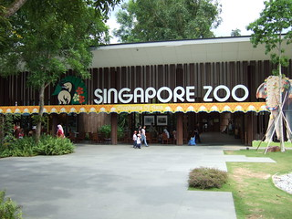 Witness the wilderness at the Zoo - Things to do in Singapore