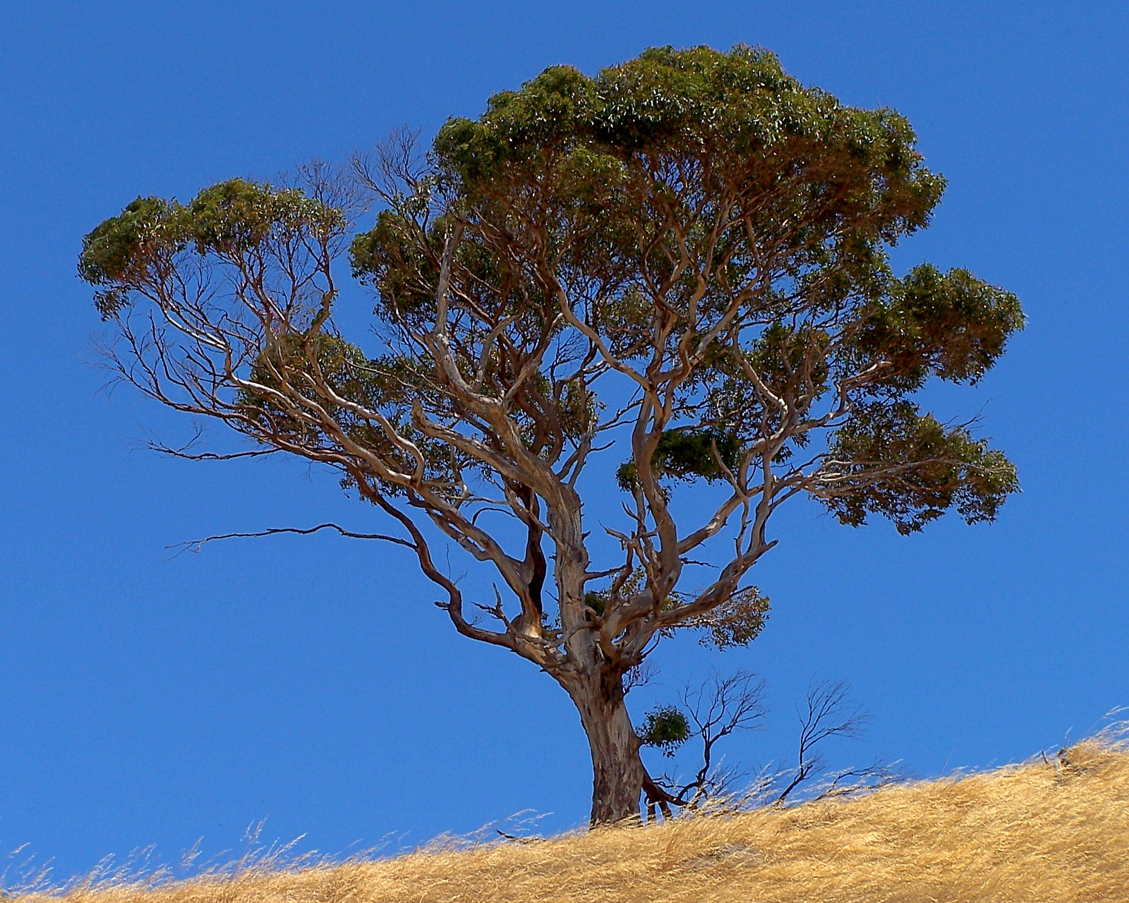 Kangaroo Island Eucalyptus Hand Cream