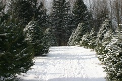 rain and snow mixed(0.0), woodland(1.0), evergreen(1.0), branch(1.0), winter(1.0), tree(1.0), snow(1.0), frost(1.0), forest(1.0), temperate coniferous forest(1.0), freezing(1.0), spruce(1.0),