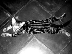 Dr Cat Dang Newport Beach