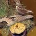 Bird and box