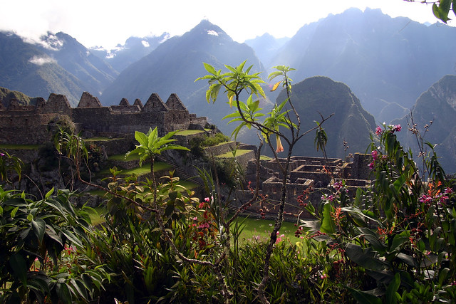 Machu Picchu Flowers