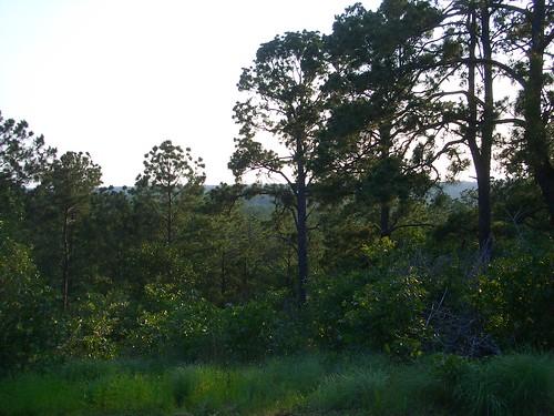 camping trees landscapes bastropstatepark