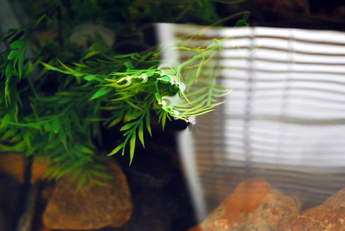 artificial aquarium plant