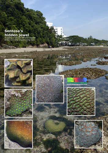 A4 Poster: Sentosa's natural shore