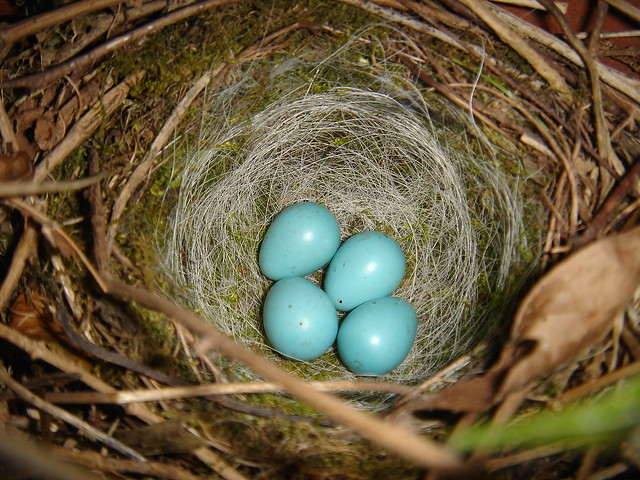 Sparrow S Eggs Flickr Photo Sharing