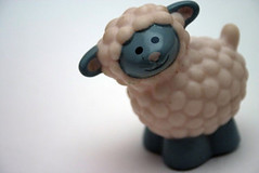 Sheep By Alicia Harvey (via Flickr)