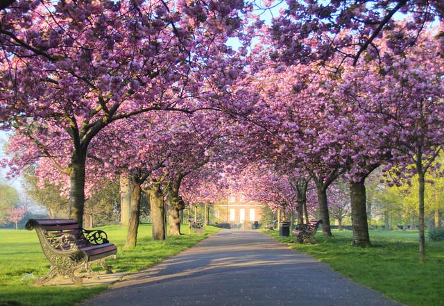 0250 Greenwich Park