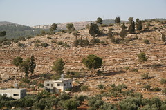 homes, trees and a settlement