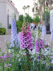 annual plant(1.0), flower(1.0), garden(1.0), plant(1.0), flora(1.0), floristry(1.0), digitalis(1.0), delphinium(1.0),