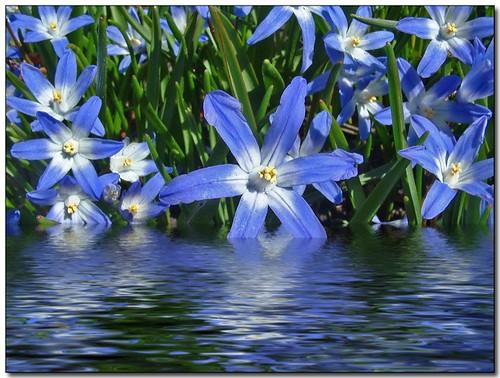 Flooded Garden (2)