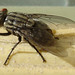Small photo of FLY