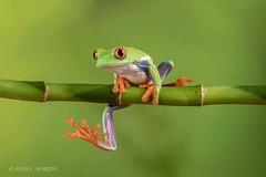 Just hangin' around!