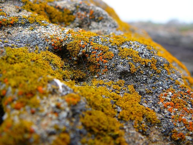 lichen and moss symbiotic relationship activities