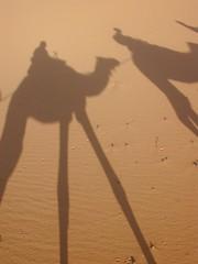 silhouette(0.0), sand(1.0), aeolian landform(1.0), natural environment(1.0), desert(1.0), landscape(1.0), camel(1.0), sahara(1.0), shadow(1.0),