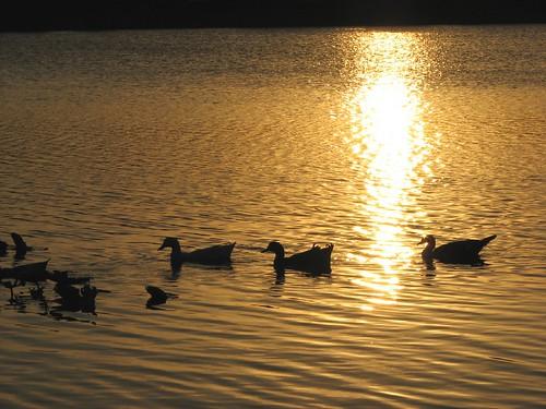 sunset sun lake reflection set swimming pond ducks wading peopleschoice supershot 10faves instantfave holidaysvacanzeurlaub superbmasterpiece flickrchallengegroup wowiekazowie