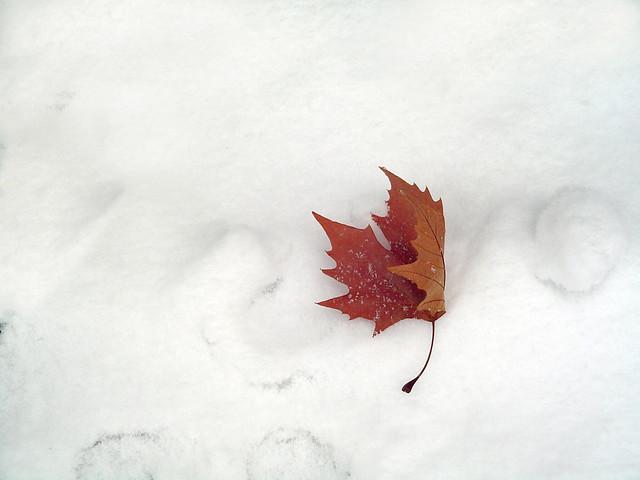 Hoja en la nieve