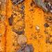 Rusty orange hues
