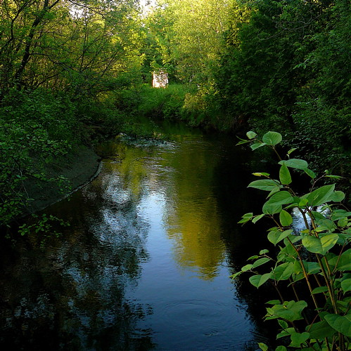 My wild river in summer!