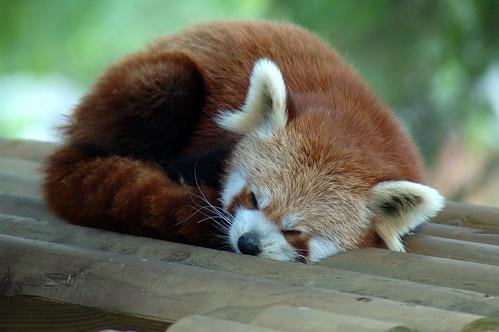 Sleeping firefox