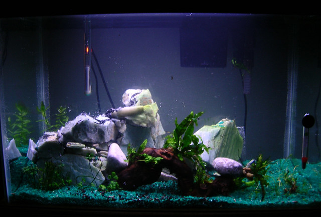 Redone tank, view from front